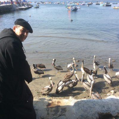 Observando lo pelicanos en Lima
